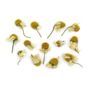 Herbs (3)